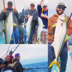 Huge yellowtail biting yesterday despite winds at 25knots for Deep sea fishing dana point
