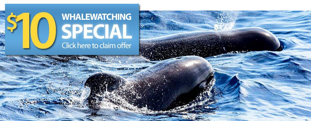 whalewatch-slider2