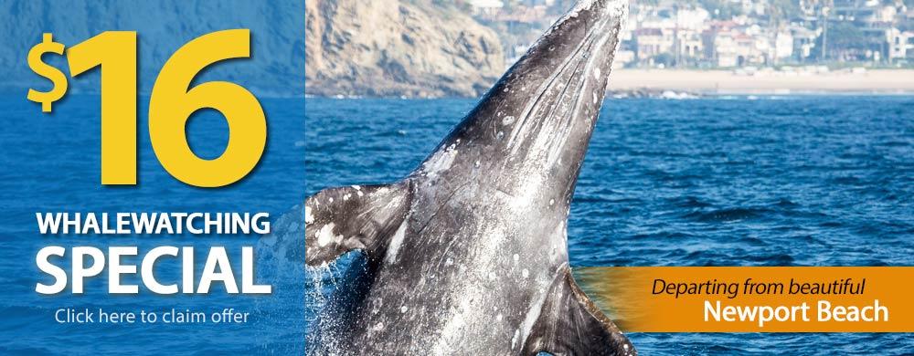 Laguna Beach Whale Watching $16 Special