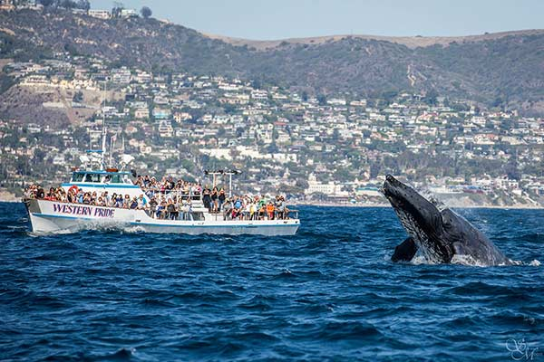 Los Angeles Visitors Whale Watch
