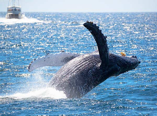 Whale Watching Near Los Angeles