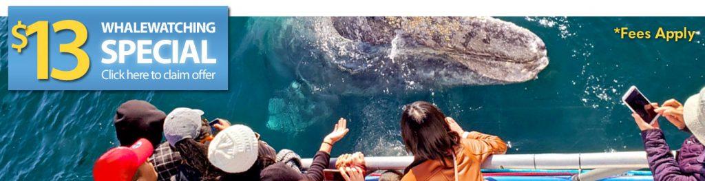 Whale Watching Dana Point $13 Offer | Davey's Locker